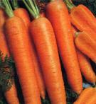 Приправа из моркови. Консервирование овощей и плодов.<br> Вкусный  рецепт домашних заготовок