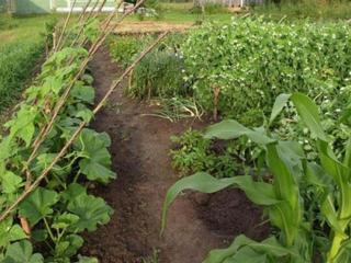 Про удобрения: советы немецких садоводов