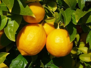 Лимоны обладают широким спектром целебных свойств
