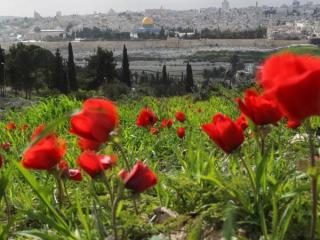 Цветы в Израиле