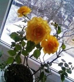 Комнатные растения и зимой могут быть здоровыми и красивыми!