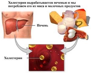 Совсем без холестерина наш организм тоже не сможет обойтись.
