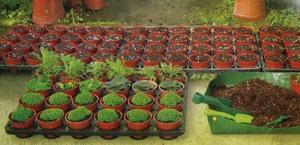 Работы в саду