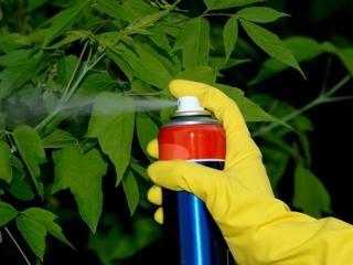 Уход за комнатными растениями: безопасность при работе с пестицидами
