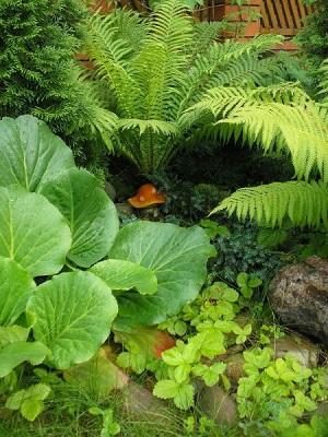 Выбор растений и раскисление почвы