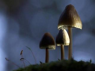 Оказание первой помощи при отравлении грибами