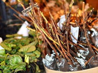 Как сохранить посадочный материал до высадки в грунт