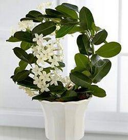 Комнатное цветоводство: растения в вашем доме
