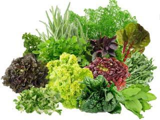 Первая садовая зелень на нашем столе: рецепты из зелени