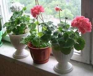 Комнатные цветы для вашей кухни: 20 идеальных вариантов Тренды 97