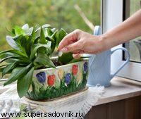 Как правильно провести подкормку комнатных растений