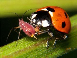 Полезные обитатели вашего сада: божьи коровки, муравьи, пауки, лягушки
