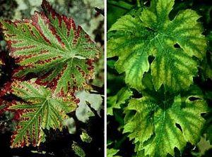 Уход и лечение комнатных растений