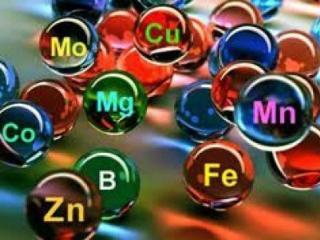 Дефицит витаминов и микроэлементов в организме