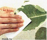 Чистота комнатных растений