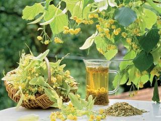 Лекарственные растения от бронхита
