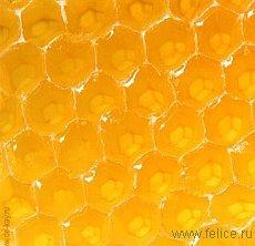 Лечение медом  бронхита, гриппа, простудных заболеваний