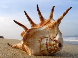 Ракушки напомнят о море
