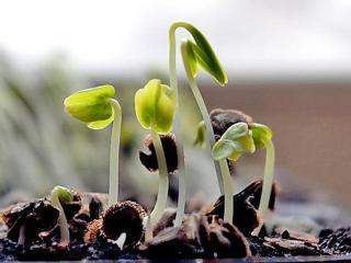 Весна: секреты выращивания здоровой рассады