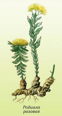 Лекарственные растения для красоты и здоровья