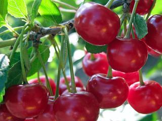 Мармелад вишневый твердый. Домашние заготовки