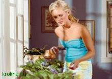 Домашние цветы и приметы