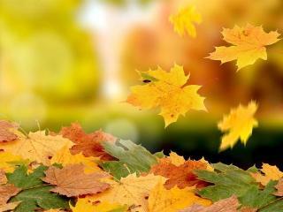 Осенние мгновения счастья. Часть 1