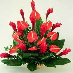 Антуриум домашние цветы