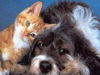 Животные – врачеватели