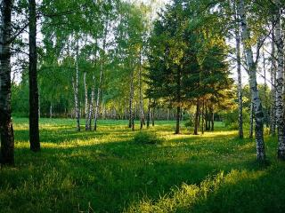 Деревья лечат. Нетрадиционные методы лечения