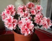 Домашние растения  для чистого воздуха в вашей квартире
