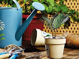Весенняя пересадка комнатных растений