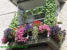 Цветы для вашего балкона