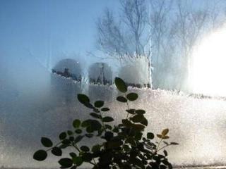Уход за комнатными растениями в холодное время года